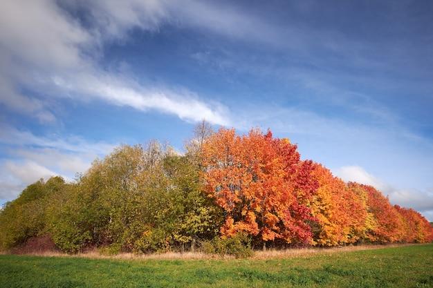 Красные и зеленые осенние деревья на фоне голубого неба