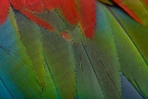 赤と緑のコンゴウインコ、羽にクローズアップ