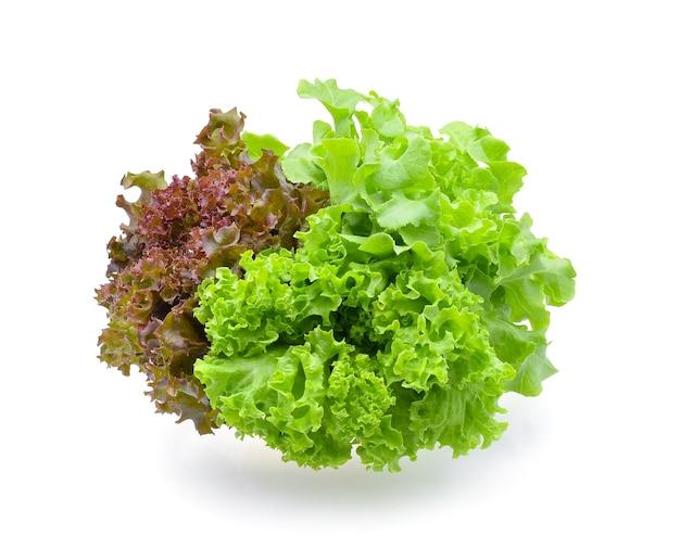 Красный и зеленый дубовый салат на белом фоне