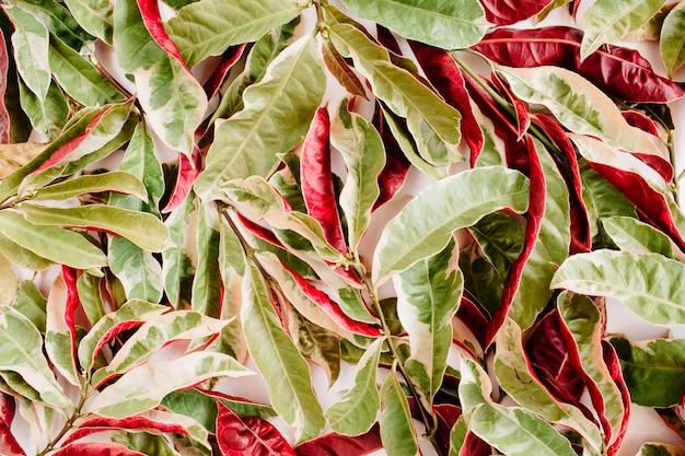 白地に赤と緑の花びらのパターン。