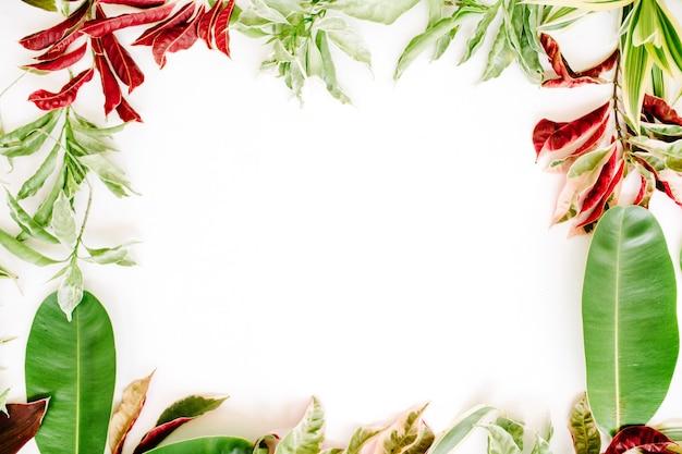 빨간색과 녹색 꽃잎과 흰색 바탕에 리프 프레임.