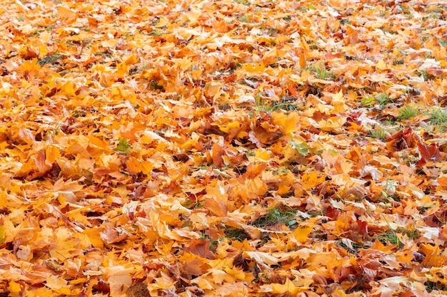 Красные и оранжевые осенние листья фон