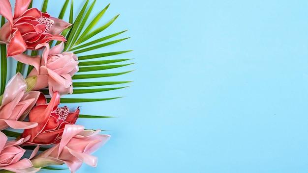 파란색 배경, 복사 공간, 배너에 빨간색과 분홍색 열 대 꽃 토치 생강 (etlingera elatior)