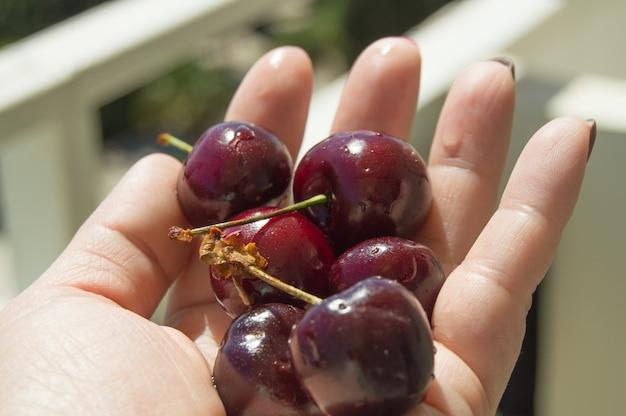 여성 손바닥에 붉은 익은 열매, 밝은 햇빛