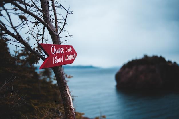 Красный и белый знак не курить на коричневом стволе дерева возле водоема в дневное время