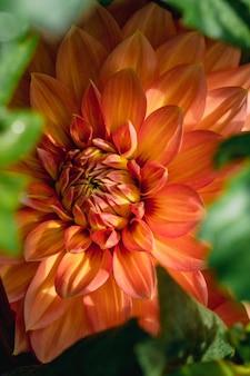 マクロ撮影で赤と黄色の花