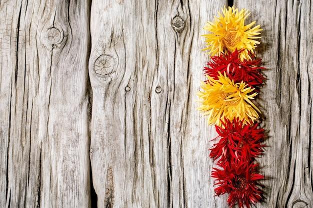 Красные и желтые цветы паука герберы в рядовой композиции