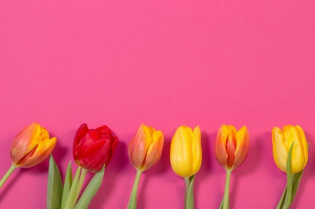 Красные и желтые тюльпаны на розовом фоне
