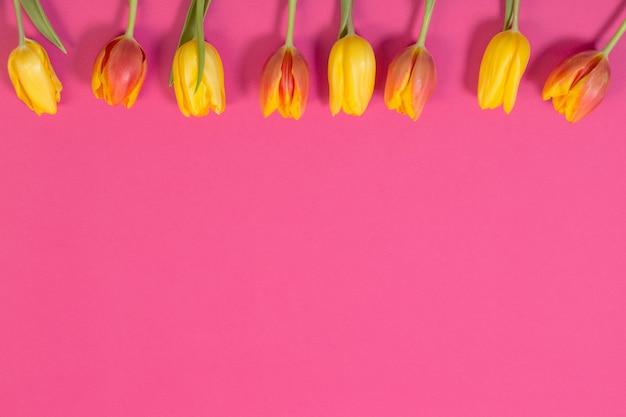 분홍색 표면에 빨간색과 노란색 튤립