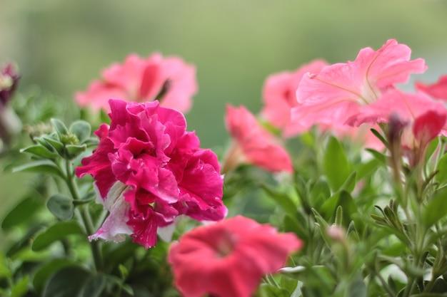 Красные однолетние цветущие цветы на балконе с видом на улицу