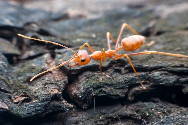 붉은 개미 매크로