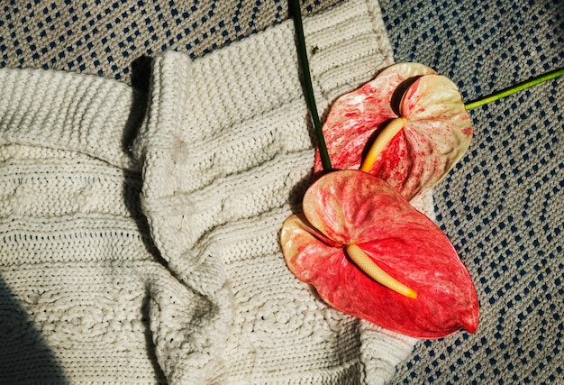 Red anthuriums with a beige knitted sweater flatlay