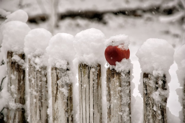 Red apple on the fence in the snow