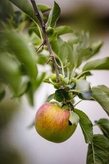 녹색 잎에 빨간 사과 과일