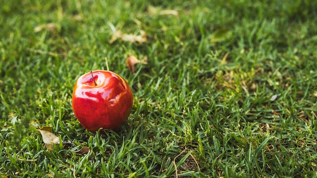 Red apple on green lawn