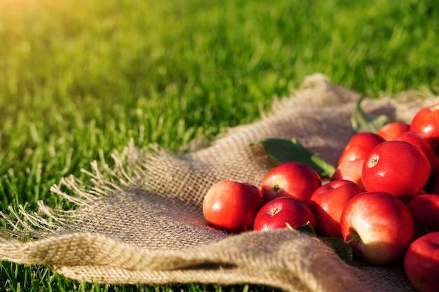 잔디에 삼베 천에 빨간 사과가 흩어져 있습니다 가을 농장 자연 에코 제품 여유 공간 블...