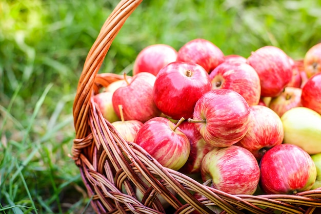 Red apples in basket on green grass in the garden