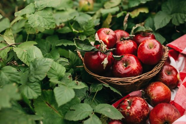 바구니에 빨간 사과