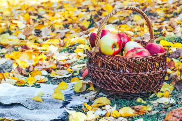 노란색 단풍의 격자 무늬 배경으로 고리 버들 세공 바구니에 빨간 사과.