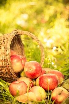 秋の屋外の赤いリンゴ。感謝祭の休日のコンセプト