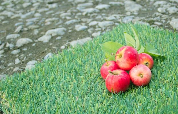 빨간 사과는 푸른 잔디에 놓여 있습니다. 수확하다
