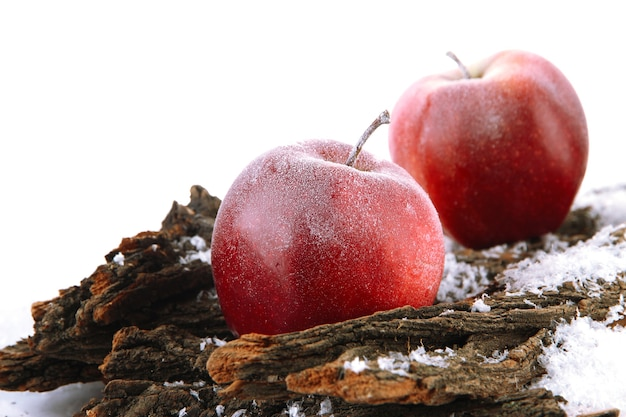 雪の樹皮の赤いリンゴがクローズアップ