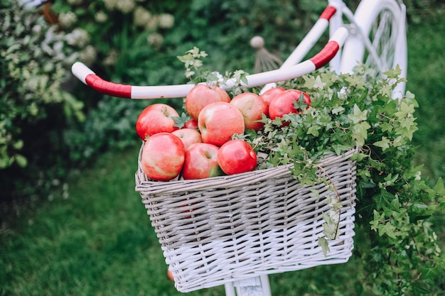 Red apples white basket on a bicy