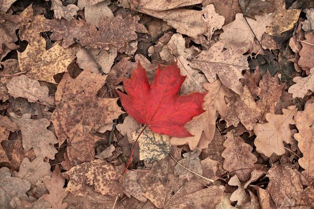 黄色の葉に赤い紅葉