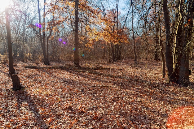 Red autumn leaves. carpathians, ukraine, europe.