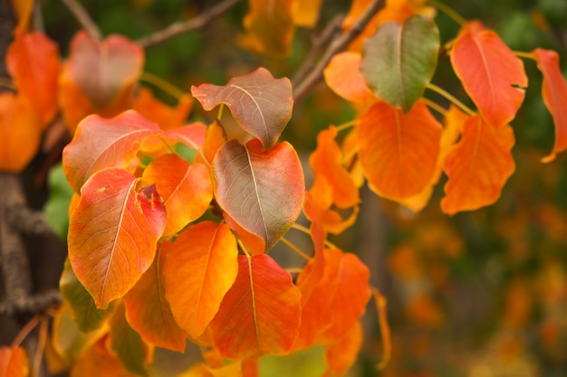 Красные осенние листья, очень неглубокий фокус, солнечный день