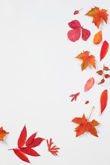 Red autumn leaves on white background