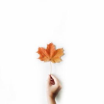 화이트에 여자의 손에 붉은을 단풍 잎