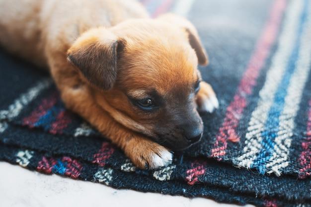 外に横たわっている赤い赤ちゃん犬。