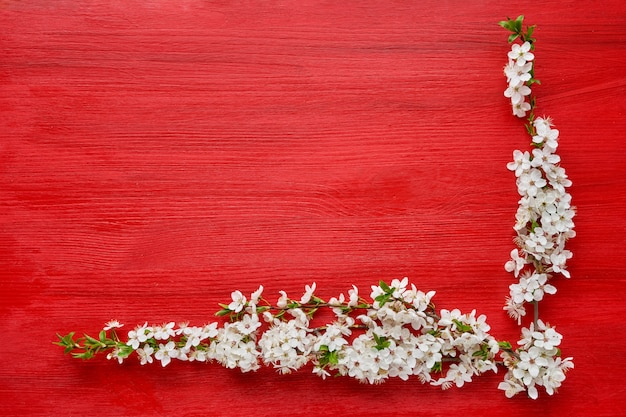 Red background with spring blooming branch of plum trees. holiday background