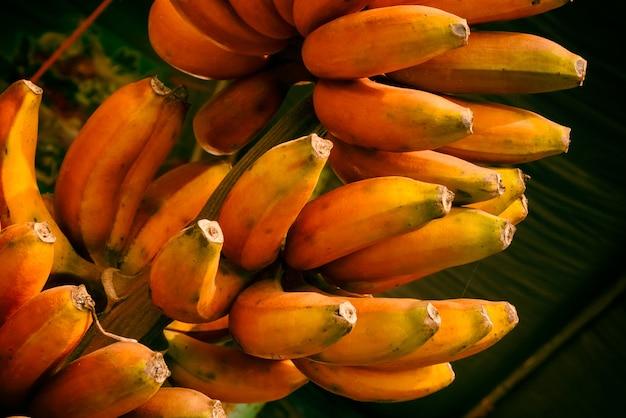 Red banana, musa banana (musa paradisiaca)