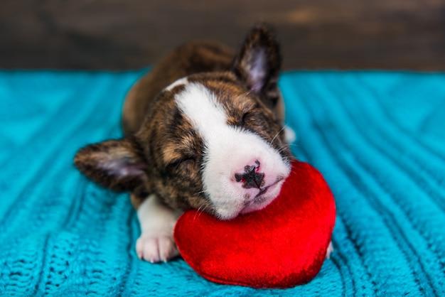 赤いハートで眠っている赤いバセンジーの子犬犬
