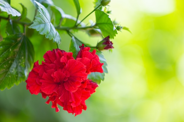 Red beautiful flowers blooming in nature