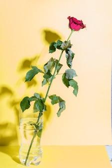 黄色の紙に影と赤の美しい花