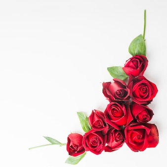 Red beautiful roses on white background