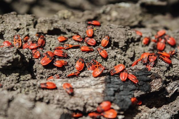 붉은 딱정벌레는 가을 햇살을 쬐고 있다