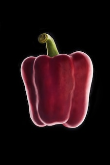 Red bell pepper over black