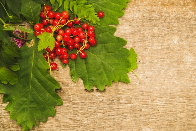 Red berries on green leaves with wild flower