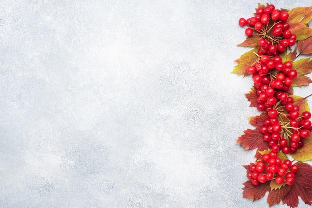葉と新鮮なガマズミ属の木の赤い果実