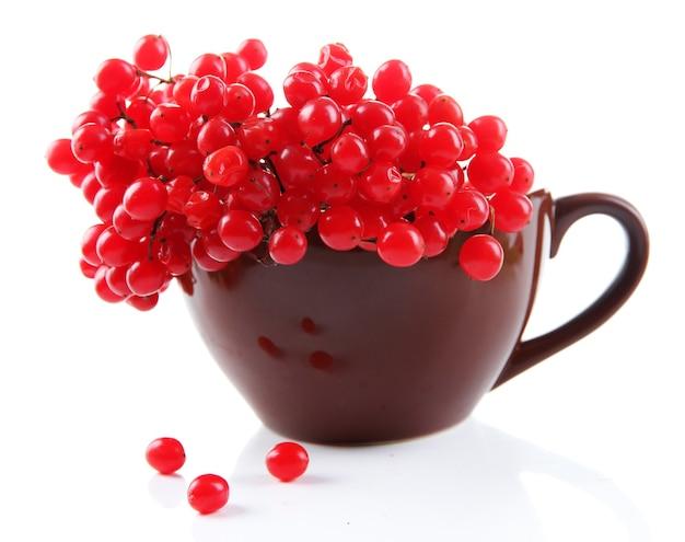 白で隔離のカップのガマズミ属の赤いベリー