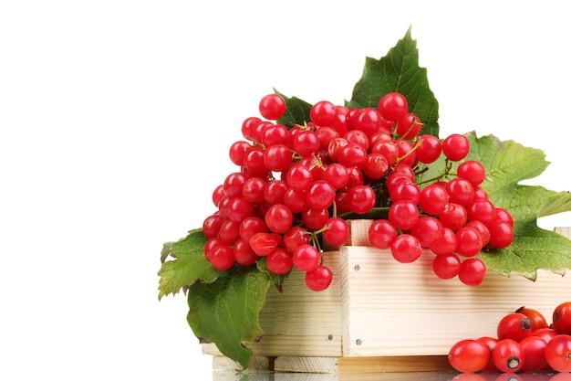 Красные ягоды калины в деревянной коробке и шиповник, изолированные на белом