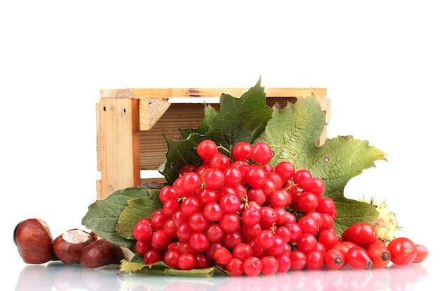 Красные ягоды калины в деревянной коробке, каштаны и шиповник, изолированные на белом фоне