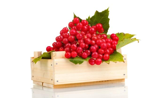 Красные ягоды калины в деревянной коробке, изолированные на белом фоне