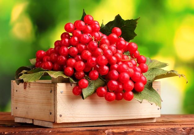 녹색 나무 상자에 가막살 나무속의 붉은 열매