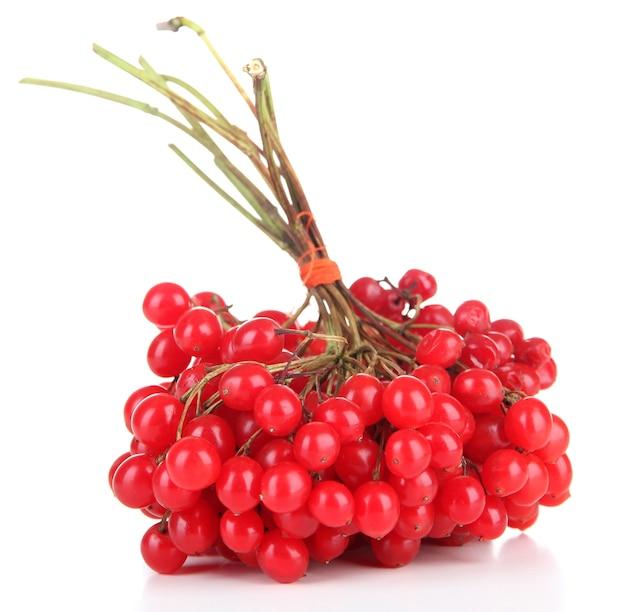 Красные ягоды калины, изолированные на белом фоне