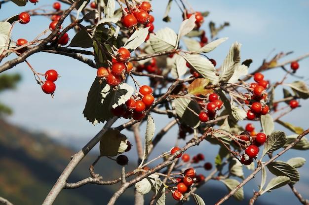 木の上の赤い実